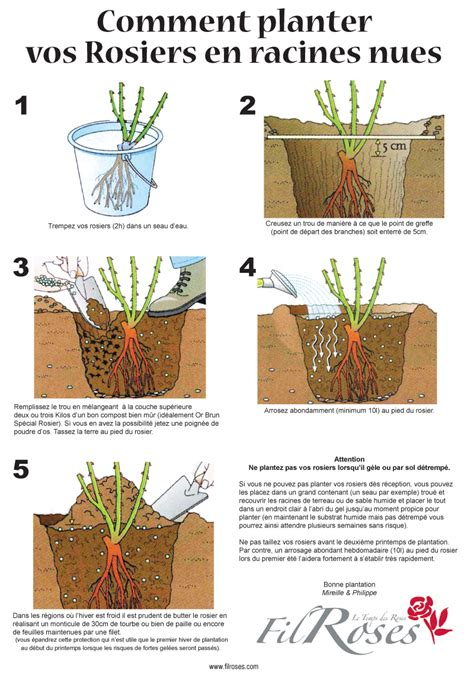 comment planter un rosier dans un pot la plantation d un rosier