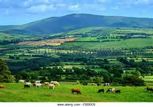 green fields of ireland stock photos green fields of