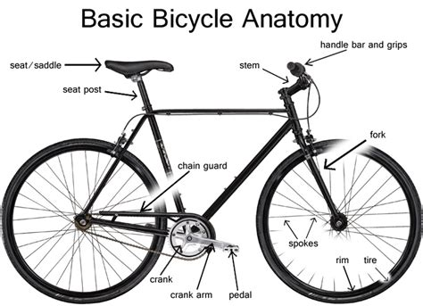 Basic Bicycle Anatomy Frame South Carolina Bike