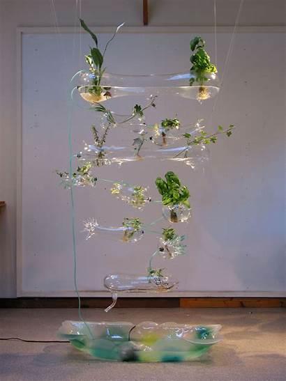 Hydroponic Herb Garden Ken Rinaldo Root Vegetables