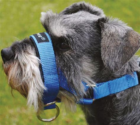 Head Halter Dog Collar