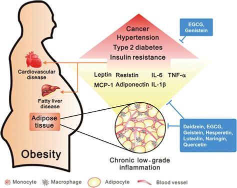 weight loss  reduce  cancer risk    enara
