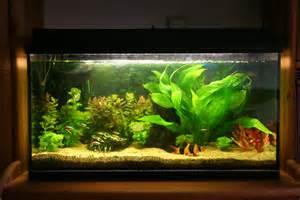 amazing fish tanks choosing the right fish tank for you