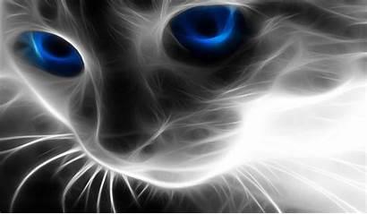 Cool Effect Wallpapers Desktop Pantalla Fondos Cat