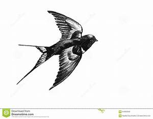 Swallow Flying Black And White Drawing Stock Vector ...