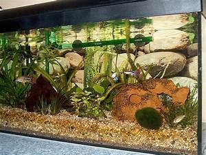 Aquarium Gestaltung Bilder : gestaltung 54l aq so denkbar aquarium forum ~ Lizthompson.info Haus und Dekorationen