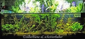 Pflanzen Für Aquarium : aquaristik ~ Buech-reservation.com Haus und Dekorationen