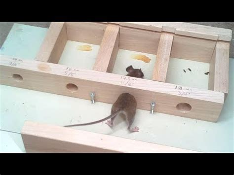 How Small A Hole Can A Mouse Get Through? Experiments