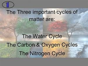 Diagram Of The Carbon And Nitrogen Cycle