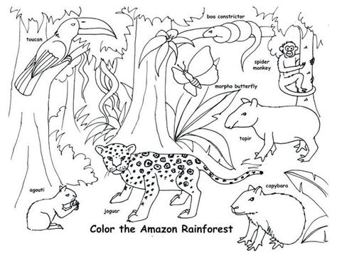 animal habitat coloring pages rainforest animals amazon rainforest animals animal habitats