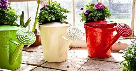 Viss, kas jāzina par istabas augu laistīšanu