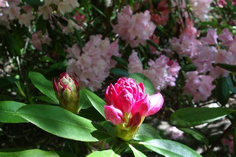 Japanischer Garten Oberlaa by Kurpark Oberlaa Takasaki Favoriten