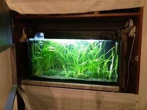 Aquarium Zubehör Günstig : aquarium mit gebogener frontscheibe und zubeh r ~ Frokenaadalensverden.com Haus und Dekorationen