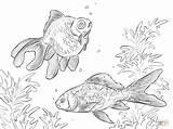 Rybki Coloring Pesci Moor Colorare Disegni Rosso Comet Kolorowanka Disegno Akwariowe Pesce Goldfish Rossi Shubunkin Kolorowanki Ryby Fish Akwarium Printable sketch template