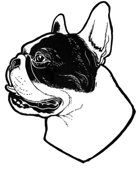 French Bulldog Illustration, tattoo stencil | Buldog | French bulldog, French bulldog drawing