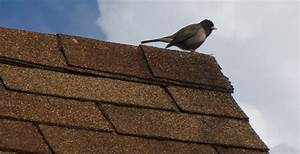 Asphalt Roofing Group Publishes Updated Shingle