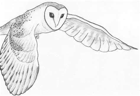 owl outline drawing barn owl by yeahbeckdraws on deviantart
