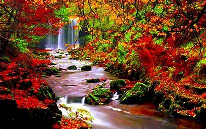 Autumn Desktop River Leaves Scenery Falling Trees