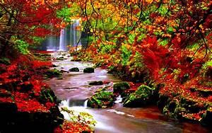 Autumn scenery stream river in autumn