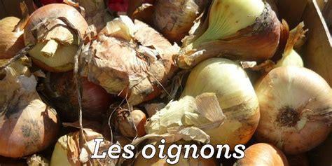 cuisiner les oignons je cuisine mon potager un site pour mieux connaitre les