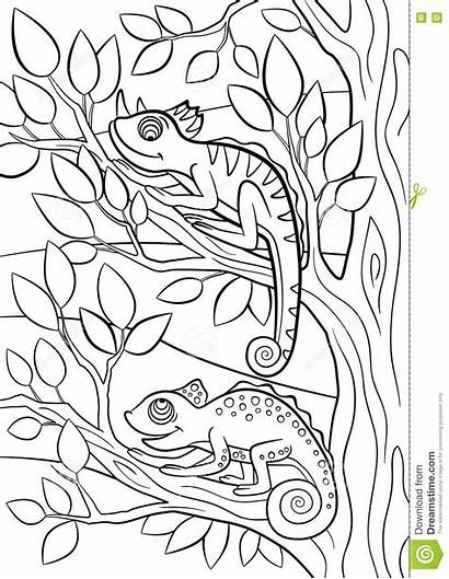 Coloring Camouflage Animals Pages Wild Chameleon Printable