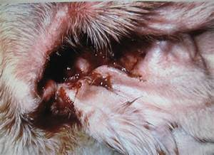Нистатиновая мазь лечит грибок ногтей