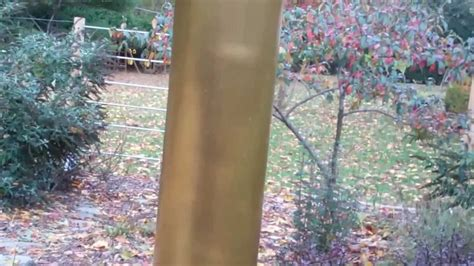 simple squirrel and raccoon barrier for bird feeders youtube