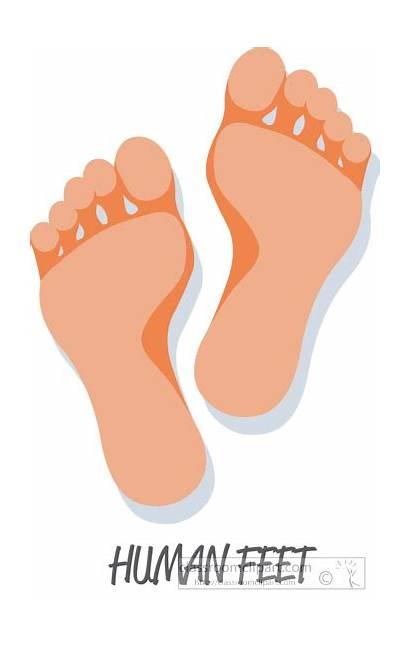 Feet Clipart Human Anatomy Clip Graphics Digestive