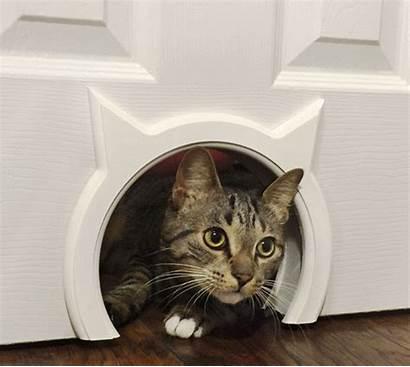 Kitty Pass Door Cat Interior