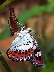 How Are Butterflies Born