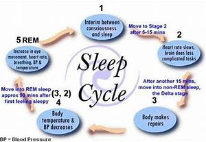 Cycle Of Sleep Sleep Stages Diagram