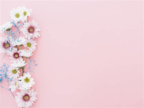 flowers  pink backgrounds flowers pink templates