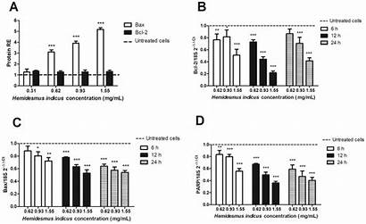Expression Relative Protein Proteins Apoptotic Genes Indicus