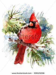 Watercolor Bird Red Cardinal Winter Christmas Stock
