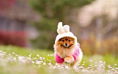 Puppy Dog Lovely Pixelstalk