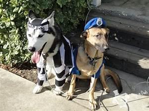 Cute German Shepherd Police Dogs 24 Hd Wallpaper ...