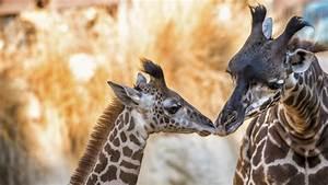 En Images  Des Zoos Lancent Un Concours De Photos D U0026 39 Animaux Mignons Sur Internet  Pour Notre Bien