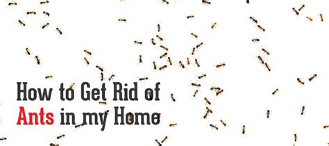 How To Get Rid Of Tiny Ants In Bathroom  28 Images How
