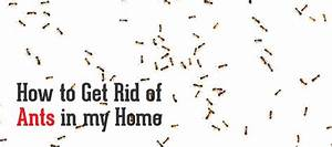 how to get rid of tiny ants in bathroom 28 images how With how to get rid of ants in your bathroom