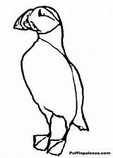 Puffin Coloring Popular Designlooter sketch template