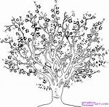 Cherry Tree Coloring Blossom Getcolorings sketch template