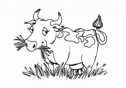 Cow Coloring Grass Eating Resources