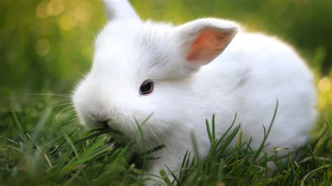 Animated Bunny Wallpapers - bunnies wallpaper 65 images