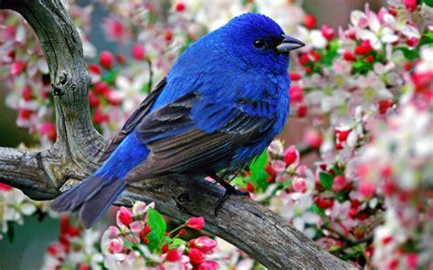 صور خلفيات طيور رائعه 50 Beautiful Birds Hd Wallpapers