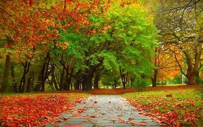 Autumn Tree Wallpapers Trees Fall Desktop Background