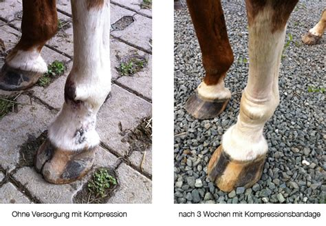 kompressionen bei pferden britta schubert
