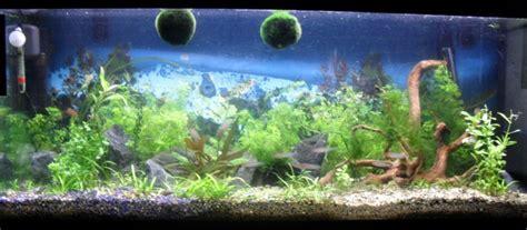 nettoyer le fond de l aquarium nouvel aquarium de 260 litres conseils page 2
