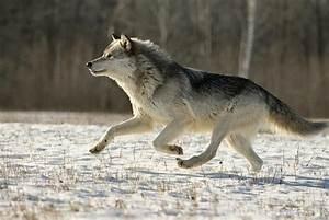 Vitesse Des Animaux : quels sont les animaux les plus rapides du monde ~ Medecine-chirurgie-esthetiques.com Avis de Voitures