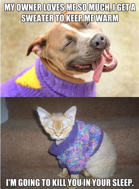 cats dogs better than why way cat pet quotes pets animals knit others think