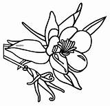 Colorado Columbine Coloring Flower Designlooter Drawing Line Phillip Martin States State United Clip sketch template
